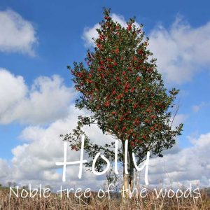 Dedicate a holly tree, the noble tree of the wood. Good for wildlife, a noble gift.