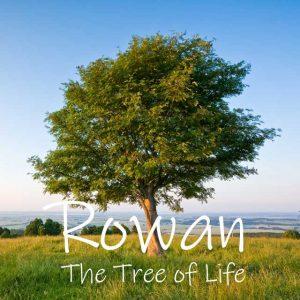 Rowan Tree, known as the tree of life