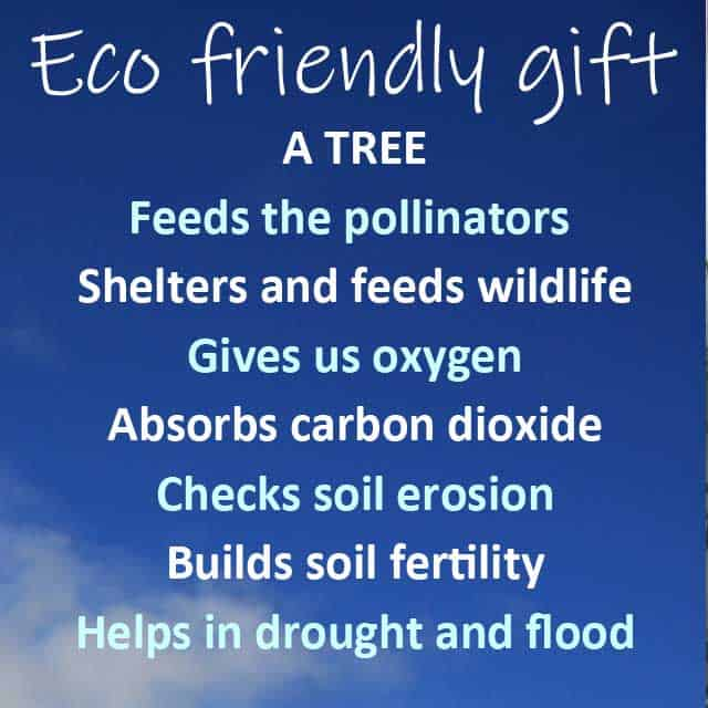 7 reasons to give an eco friendly gift