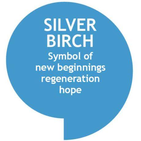 sky blue speech bubble with silver birch tree symbolism