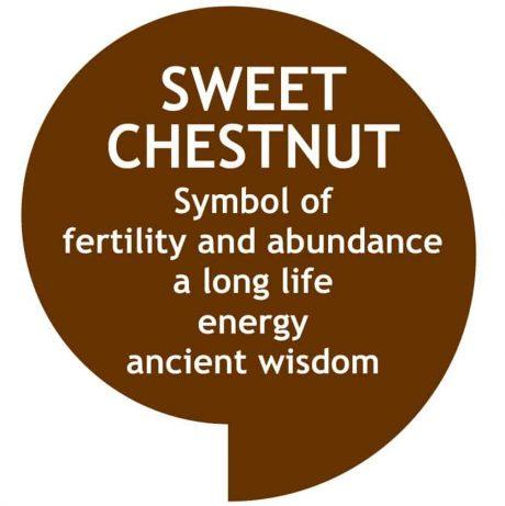 Warm dark brown speech bubble with sweet chestnut symbolism