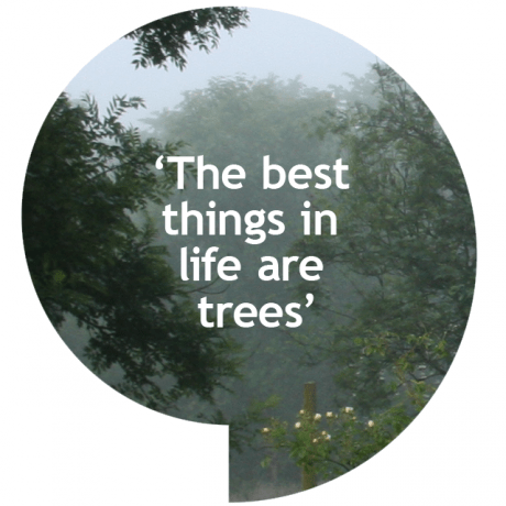 The best things in life are tree, a play on the well known phrase