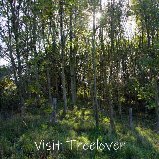Visit Treelover woodland