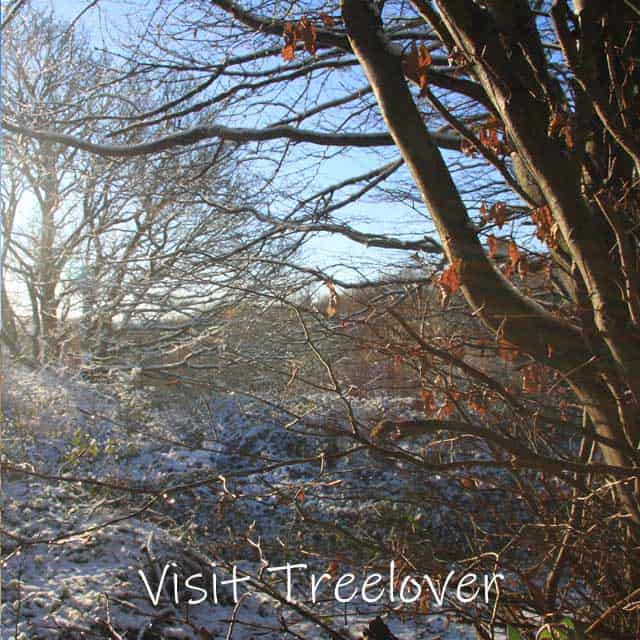 Winter wonderland, view of Treelover woodland.