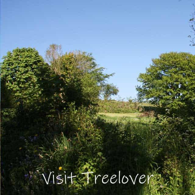 Visit Treelover in the spring