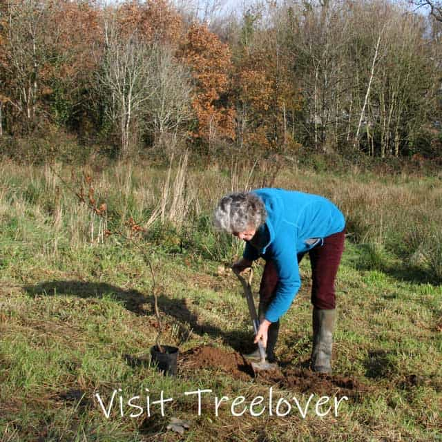 Customer planting her family trees, creating a new woodland in Wales