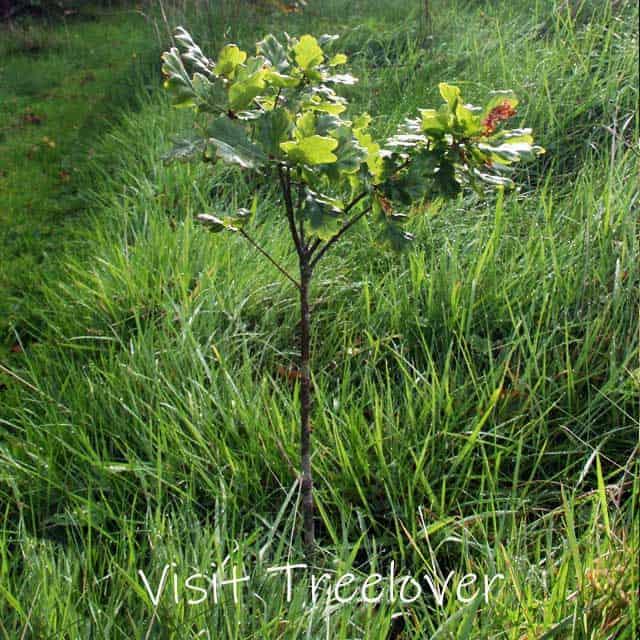 Visit-Treelover-3