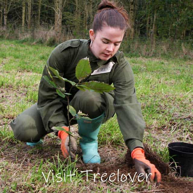 Visit Treelover and see your tree being planted