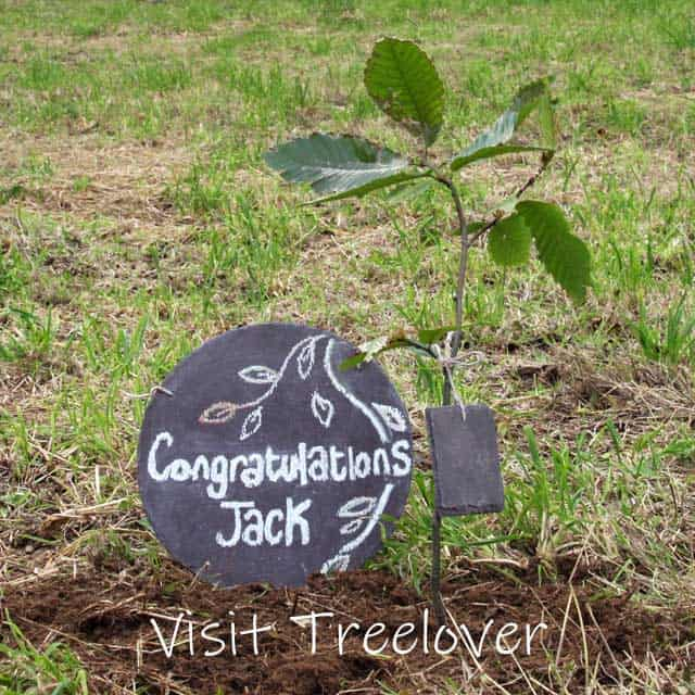 Visit Treelover to see the tree being planted