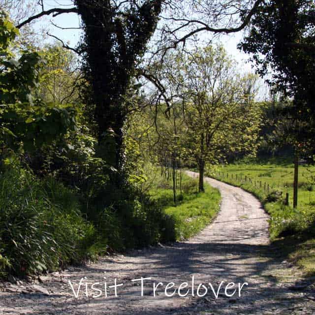 Visit-Treelover-7